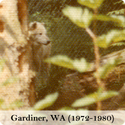 View photos of the Gardiner, WA wolf park