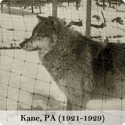 View photos of the Kane, PA wolf park