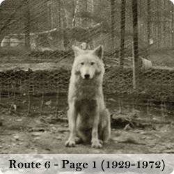 View photos of the Route 6 wolf park (page 1 - the wolves and the park)