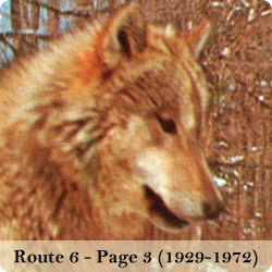 View photos of the Route 6 wolf park (page 3 - color photos of the wolves and Jack Lynch's ownership)