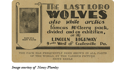 Advertisement card for Dr. McCleery's wolf pack between Gap and Coatesville, PA. Image courtesy of Nancy Plumley.