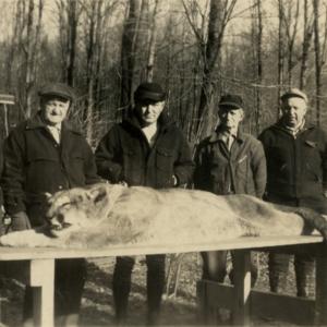 Five Men with a Dead Mountain Lion [Photograph]