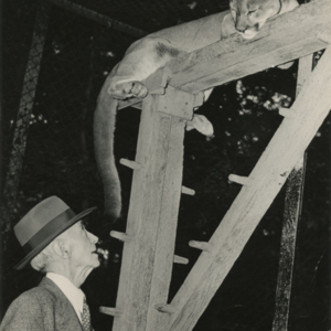 Dr. McCleery and a Mountain Lion at the Lobo Wolf Park near Kane [Photograph]