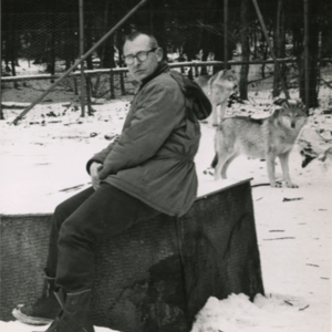 Jack Lynch in a Pen with Two Wolves at the Lobo Wolf Park near Kane [Photograph]