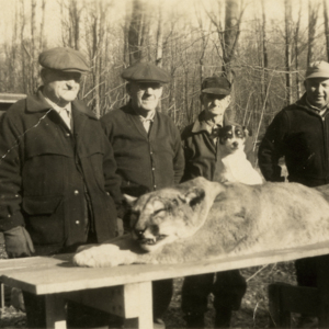 Four Men and a Dog with a Dead Mountain Lion [Photograph]